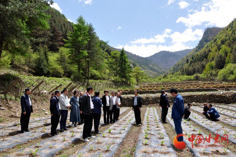 白龙江林业管理局副局长王雅秋在博峪河保护局调研