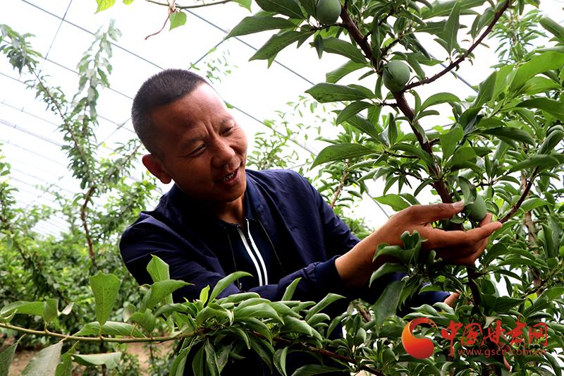 甘肃民勤:生态高地深耕绿色发展