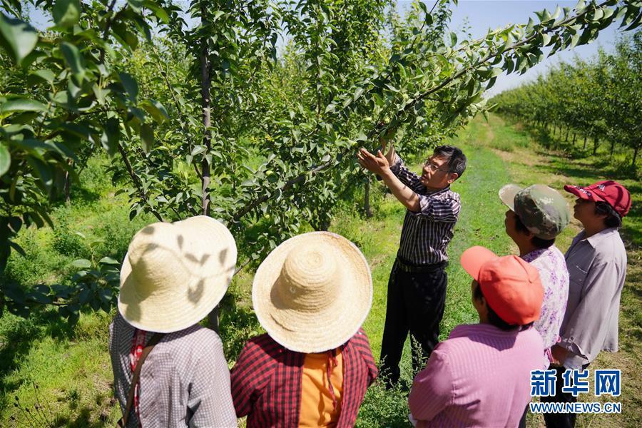 (经济)(2)河北邢台:农技服务走进乡村果园