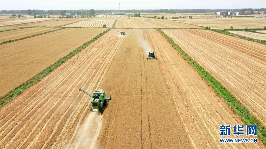(经济)(3)安徽小麦陆续开镰收割