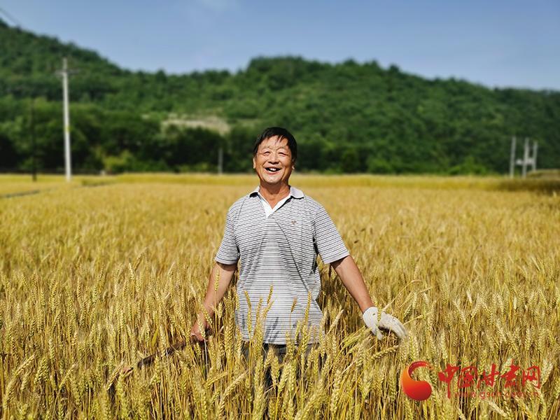 康县:麦子熟 喜丰收 农民收割露笑颜