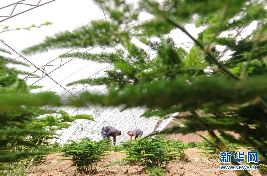(经济)(2)河北唐山:特色种植助农增收