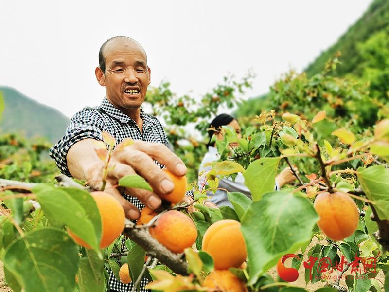 康县太石:示范园里结出了增收致富果