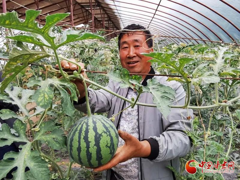 临夏县河西乡:瓜果飘香 产业兴旺