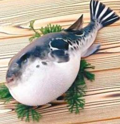 兰州市市场监督管理局发布通告禁止违法加工、经营河豚鱼