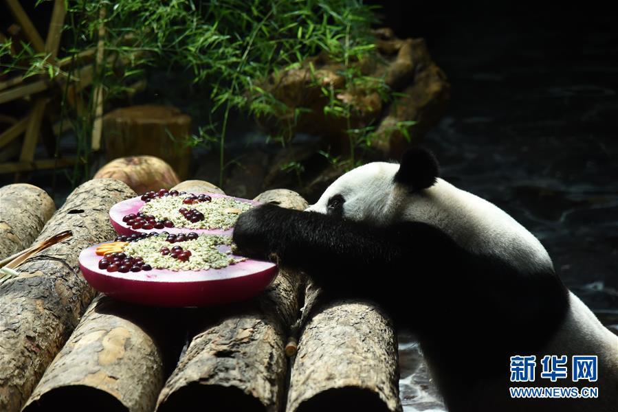 (社会)(2)济南:大熊猫享清凉