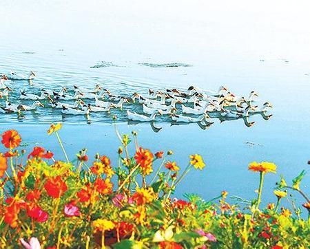 张掖湿地公园——碧波万顷风光美