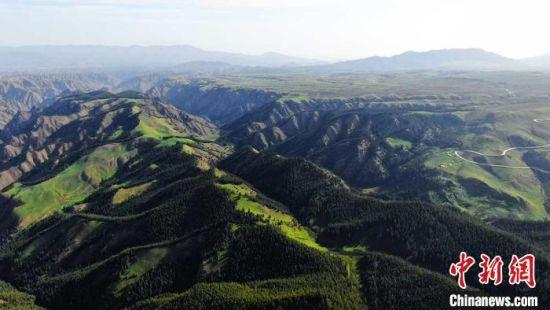 肃南:祁连山区林海一望无际 水源涵养功能增强