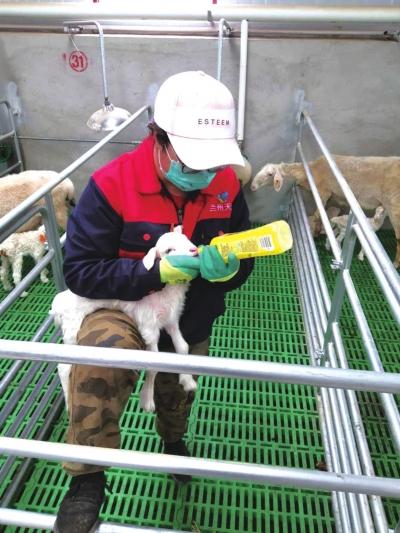 """打造甘肃养殖叫得响的品牌——兰州现代畜牧业繁育养殖示范基地""""种养加""""模式实现全产业链生态循环农业"""