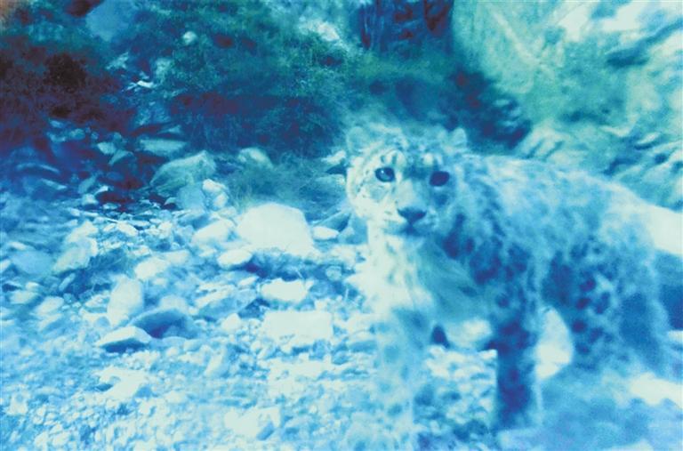 """发现多种珍稀野生动物""""现身""""甘肃安南坝"""
