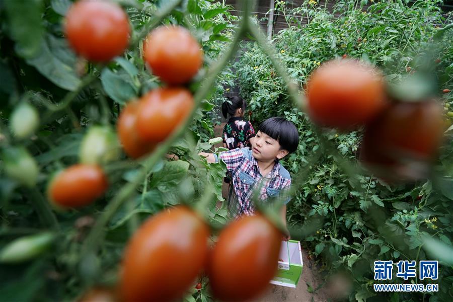"""(经济)(4)河北滦州:果蔬种植鼓起农民""""钱袋子"""""""