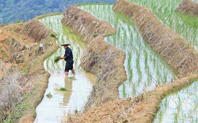 福建政和:保护农业生态资源 展现梯田独特景观
