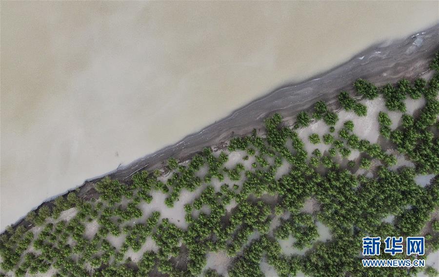 (环境)(4)雅江沿岸绿意浓