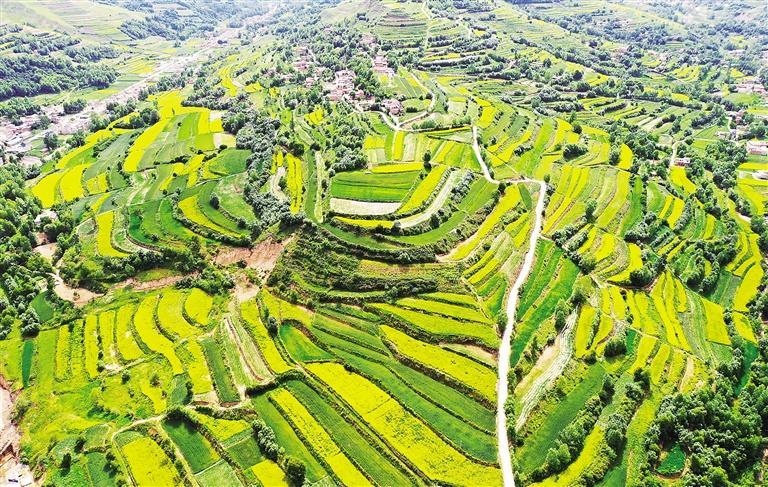 临夏县太子山沿线数万亩油菜花进入盛花期