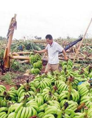 甘肃省下发400万元救灾资金支持农业生产