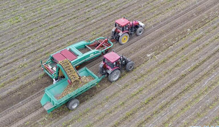 河北滦南:壮大蔬菜产业 助力乡村振兴