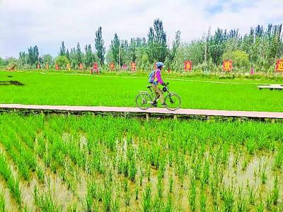 新疆阿克苏温宿县:稻草主题公园