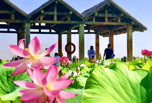 宁夏沙湖:纵情碧水金沙间 赏花赏荷享清凉