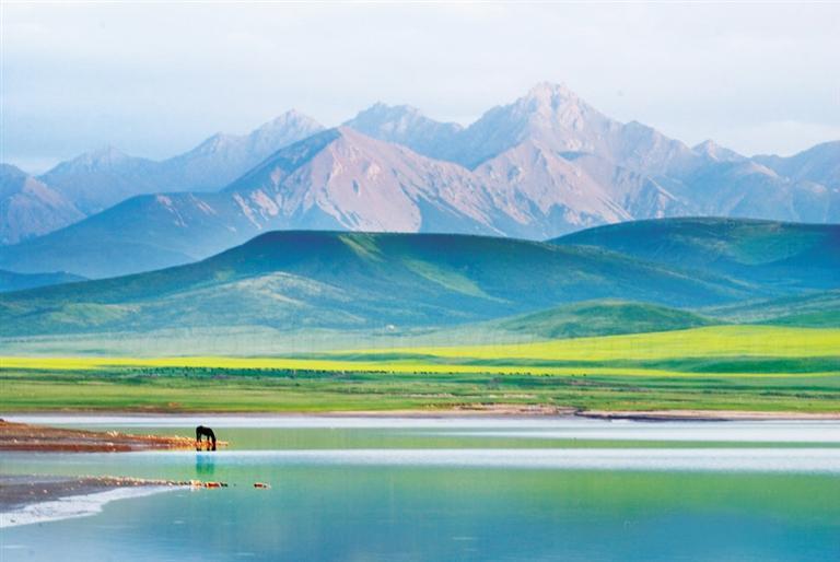 张掖:夏日塔拉草原策马黄金牧场,自有清风徐来