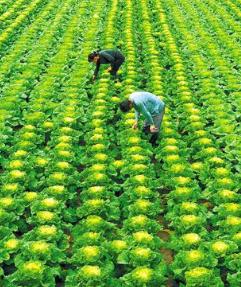 上半年甘肃省高原夏菜出口额增长3.2倍