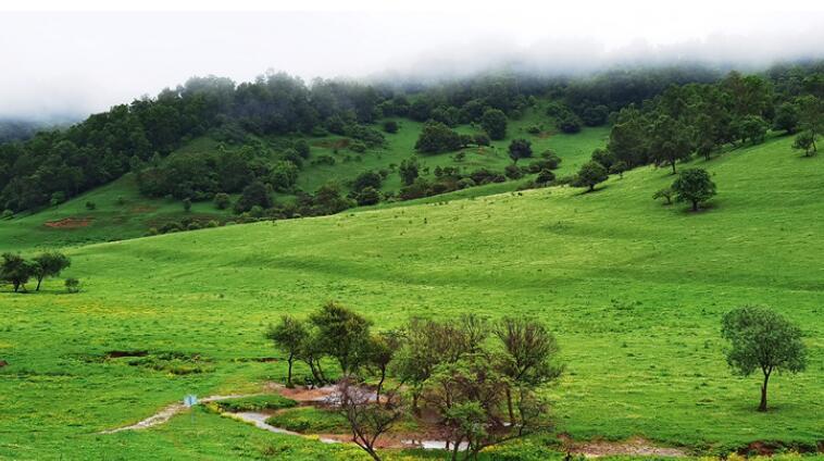 【小陇画报·96期】关山古道:美丽的草原 在千年时光里等你