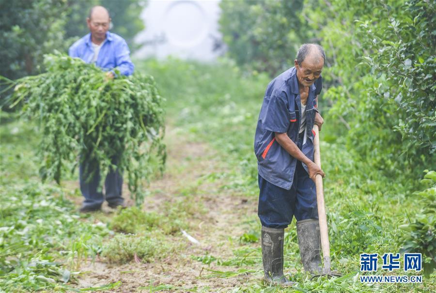 (社会)(1)河北安平:扶贫岗助力就业脱贫
