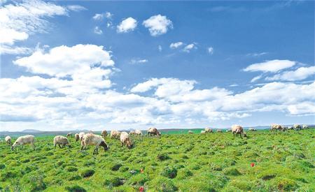 """发""""羊""""财走阳光道——甘肃推动实施""""六大特色农业产业""""精准脱贫追踪报道之羊产业"""
