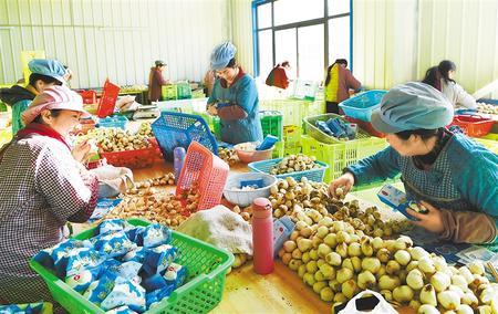 """甘肃推动实施""""六大特色农业产业""""精准脱贫追踪报道之菜产业 大菜园托起致富梦"""