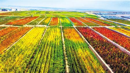 拉开架势兴产业——武威天祝县发展特色农业综述