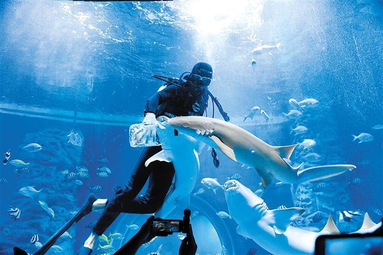 """兰州海洋公园 金昌火星1号基地 这个暑假我们""""上天入海"""""""