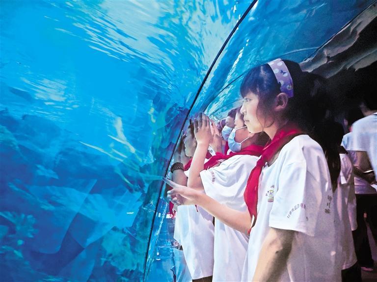 """甘南玛曲草原38名孩子看到了""""海洋世界"""""""