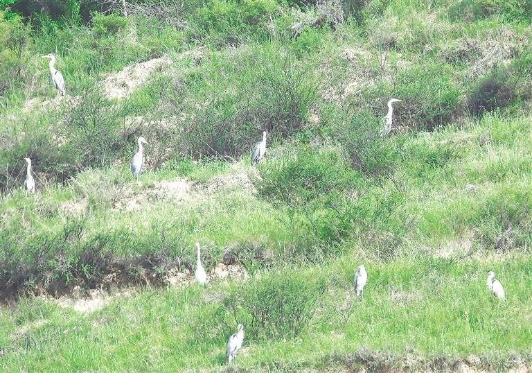临夏州康乐县加强生态保护开展爱鸟护鸟活动