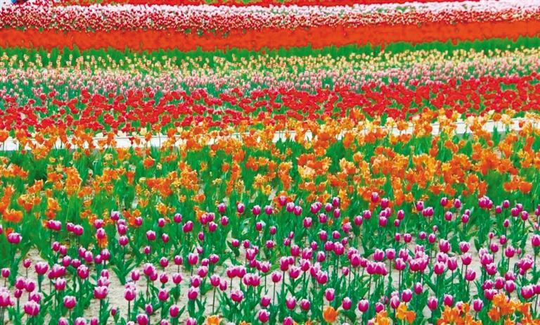 大坪凤园花海 去享受一个只属于自己的花季