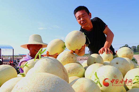 甘肃民勤:发展绿色主导产业 打造农民致富特色品牌