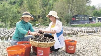 """陇南宕昌好梯乡:""""网红""""助力灾后农业生产恢复"""