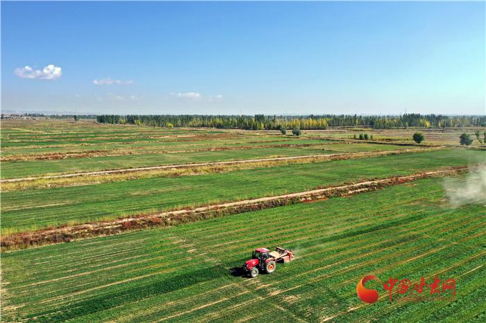 今年甘肃省小麦机收905万亩 创历史新高