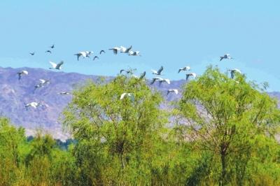 张掖黑河湿地国家级自然保护区高台段