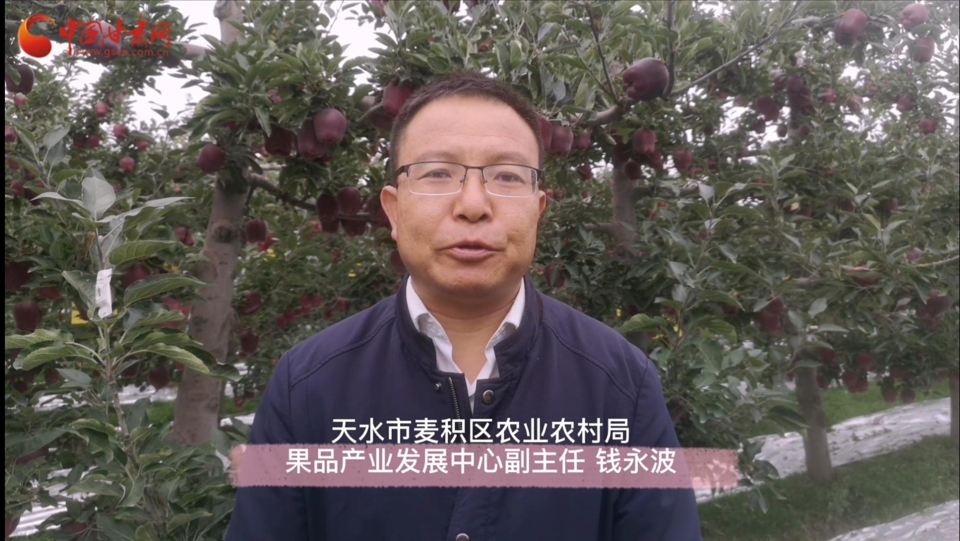 【西部开发新脉动】天水麦积:优势产业增收致富 花牛苹果助农脱贫