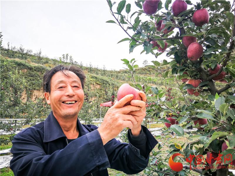 甘肃礼县:果农变身带货主播 线上畅销线下忙(组图)