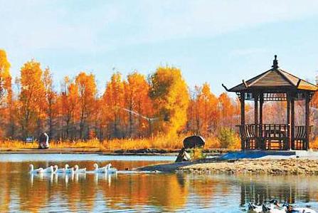 金塔胡杨文化旅游节开幕