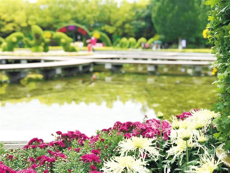 这个假期 去兰州植物园赏菊