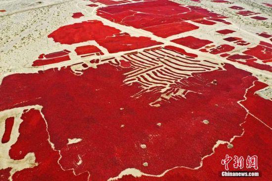"""秋日时节,甘肃省张掖市高台县合黎镇八坝村戈壁滩上,椒农正在翻晒辣椒。放眼望去,戈壁滩如""""红色海洋"""",蔚为壮观。郑耀德 摄"""