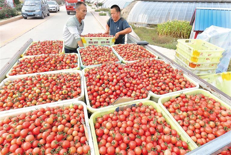 临夏州永靖县积极调整农业产业结构
