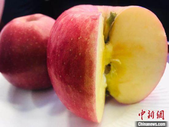 图为灵台所种植出的苹果。 艾庆龙 摄