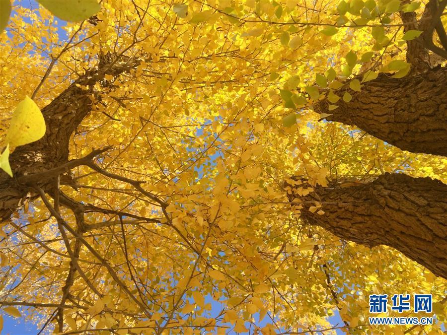 """(美丽中国)(4)秋色斑斓耀""""沙乡"""""""
