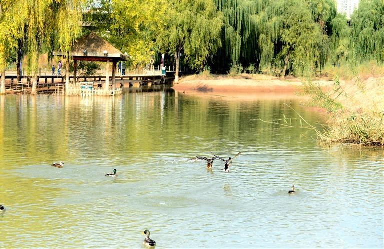 银滩湿地公园秋色宜人