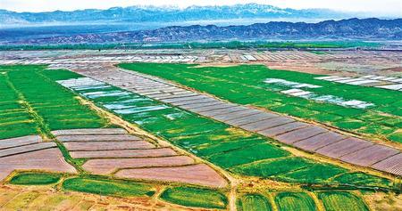 田间地头的消费扶贫