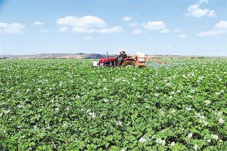 环县:小土豆种出大名堂
