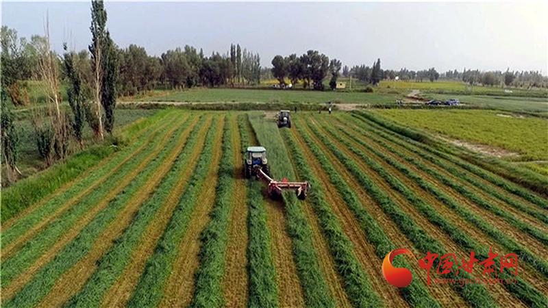 """瓜州:牧草种植带来好""""钱""""景"""