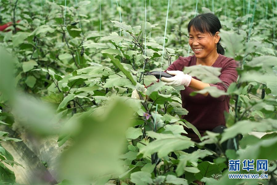 (经济)(2)富硒果蔬富农家